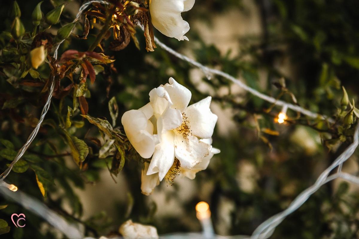 Aperitivo fotografico al Mulino della Torre. rose e luci