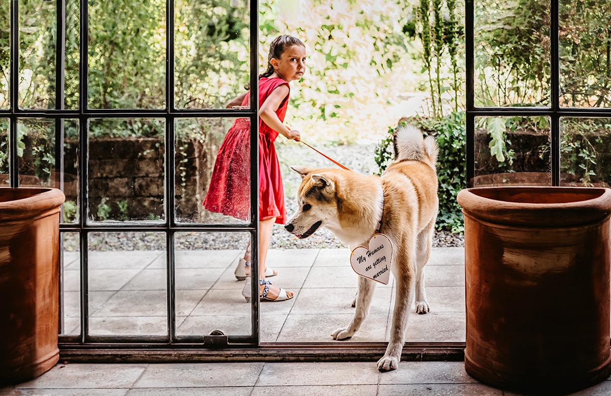 Matrimonio a Torino ai Giardini del Meisino, cane degli sposi