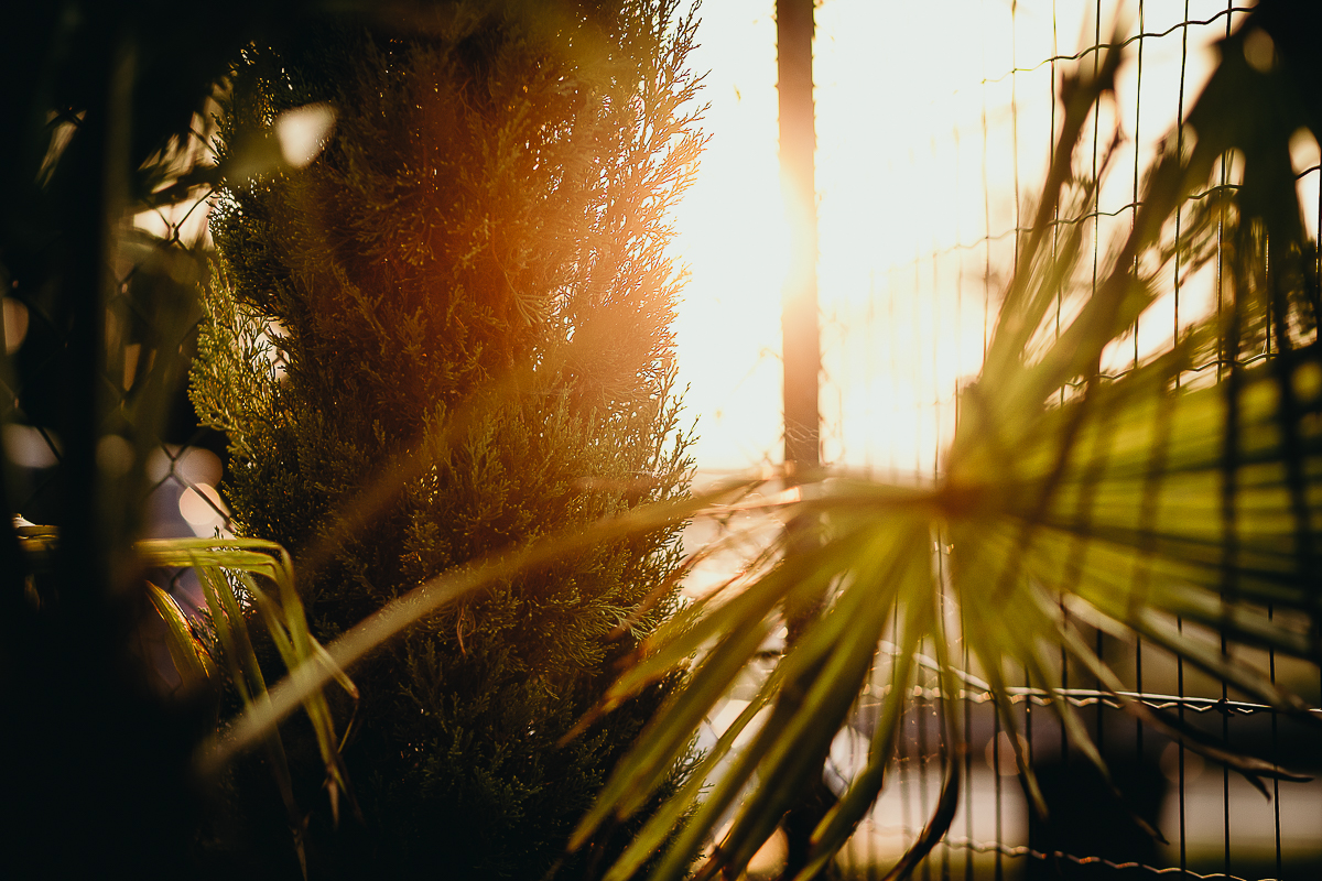 Tropical wedding, fotografo matrimonio Torino,golden Hour, sposi al tramonto